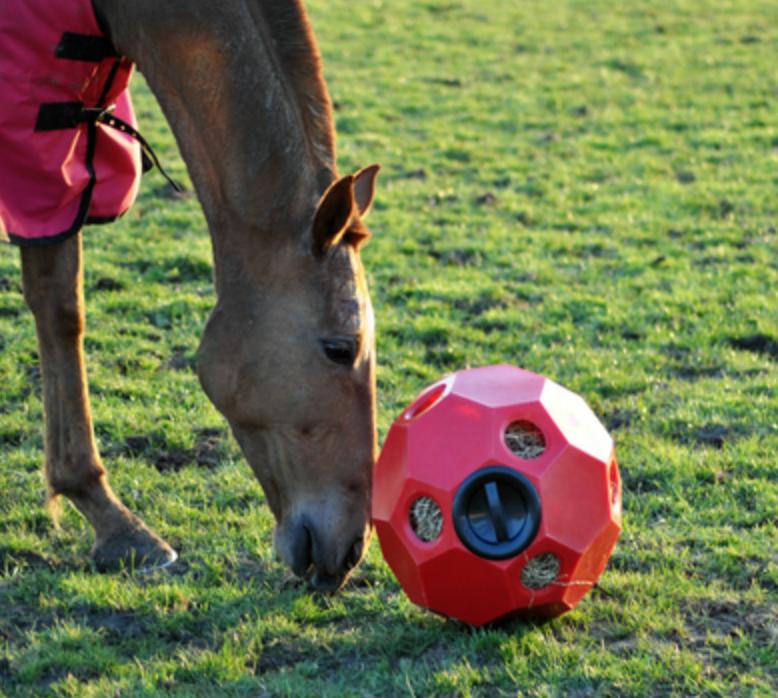 Image of   Aktivitetsbold til hø, fv. blå - Hay Play Feeder
