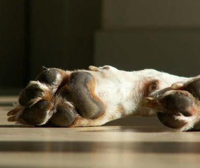 Canestra Biotin til hunde - 150 g thumbnail