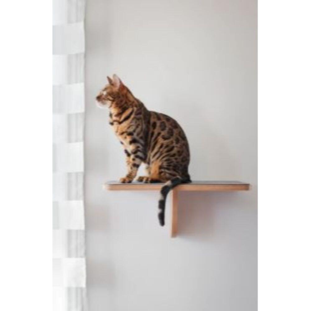 Bob katte EVO liggeplads til vægmontering thumbnail